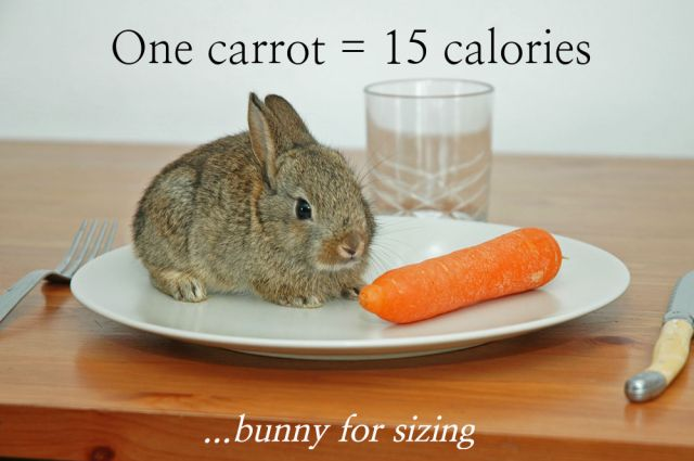 Calorie counting - 15 calories in one carrot